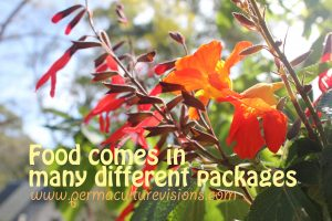 food-comes-in-different-packages_permaculturevisions