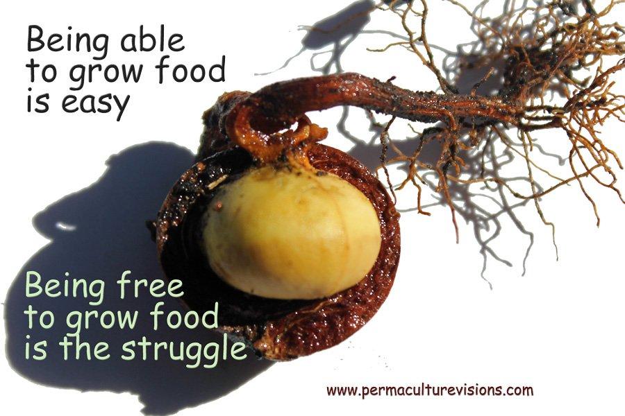 free-to-grow